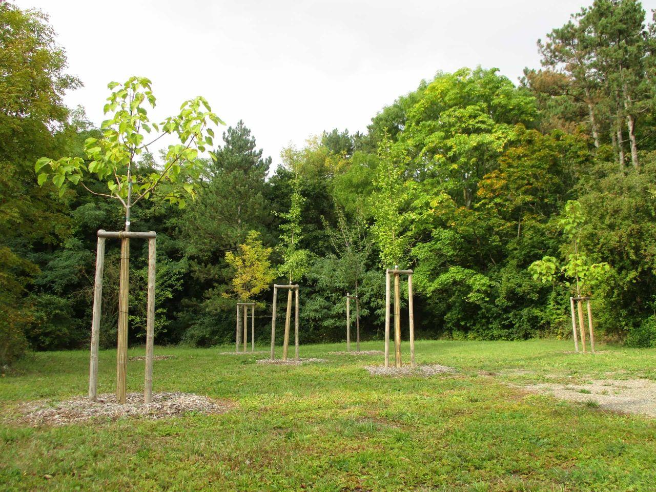 Neue Bäume braucht die Stadt