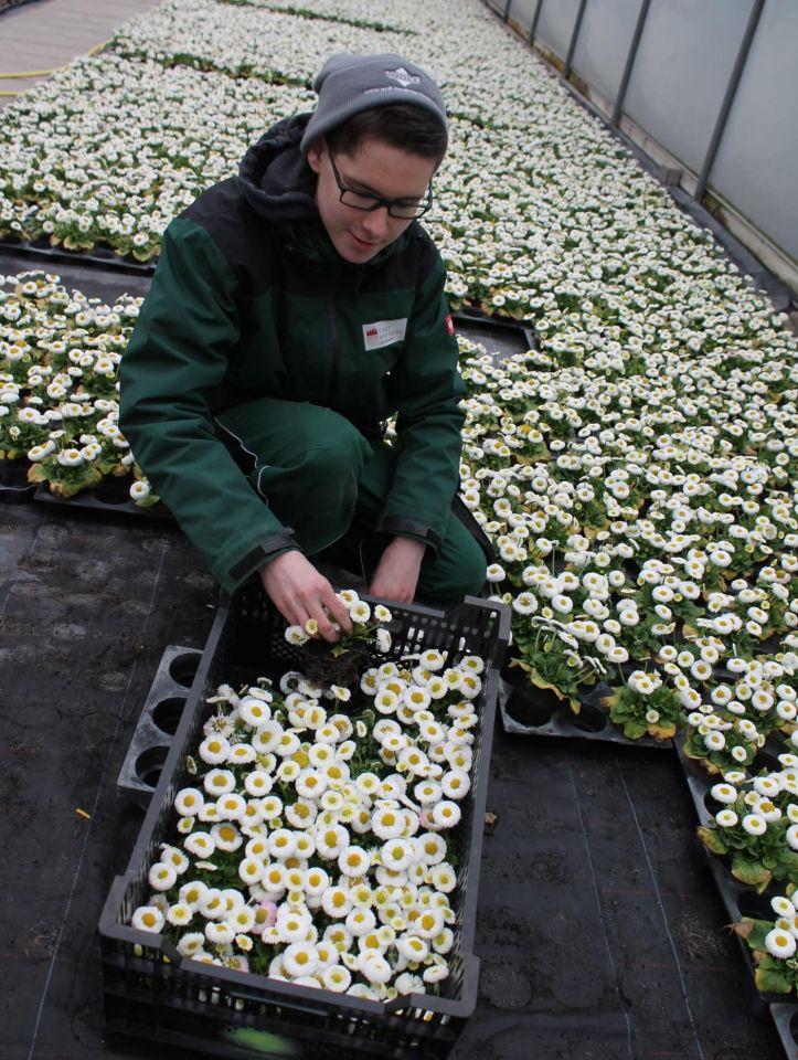 Frühlingsboten: Würzburger Gartenamt setzt 65.000 Topfpflanzen und 33.000 Blumenzwiebeln
