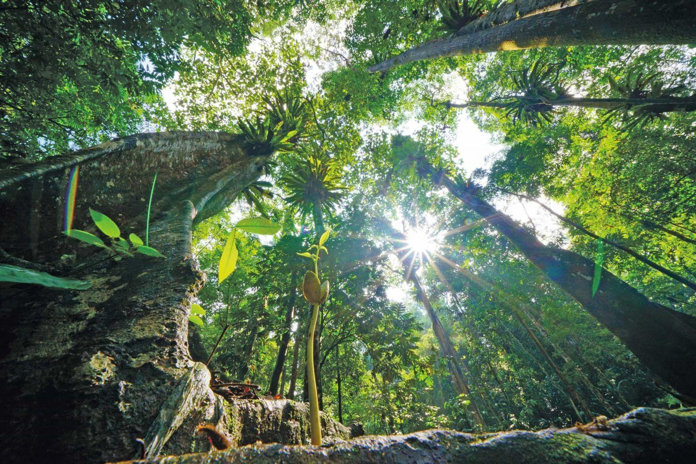 Tropenholz mit gutem Gewissen