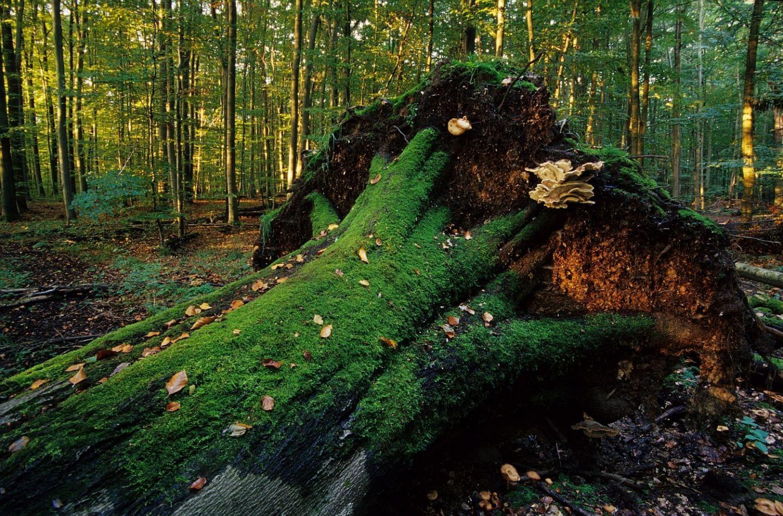 Irtenberger Wald: 510 Hektar neuer Naturwald westlich von Würzburg