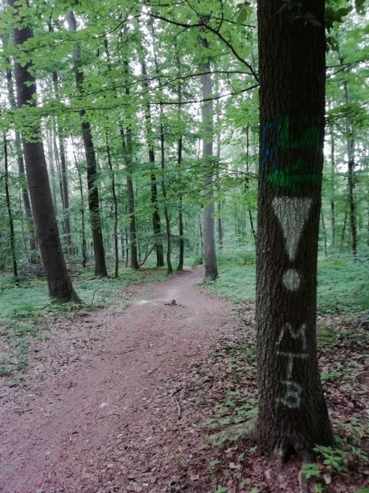 """Kein illegales Mountainbiking im Wald!"""