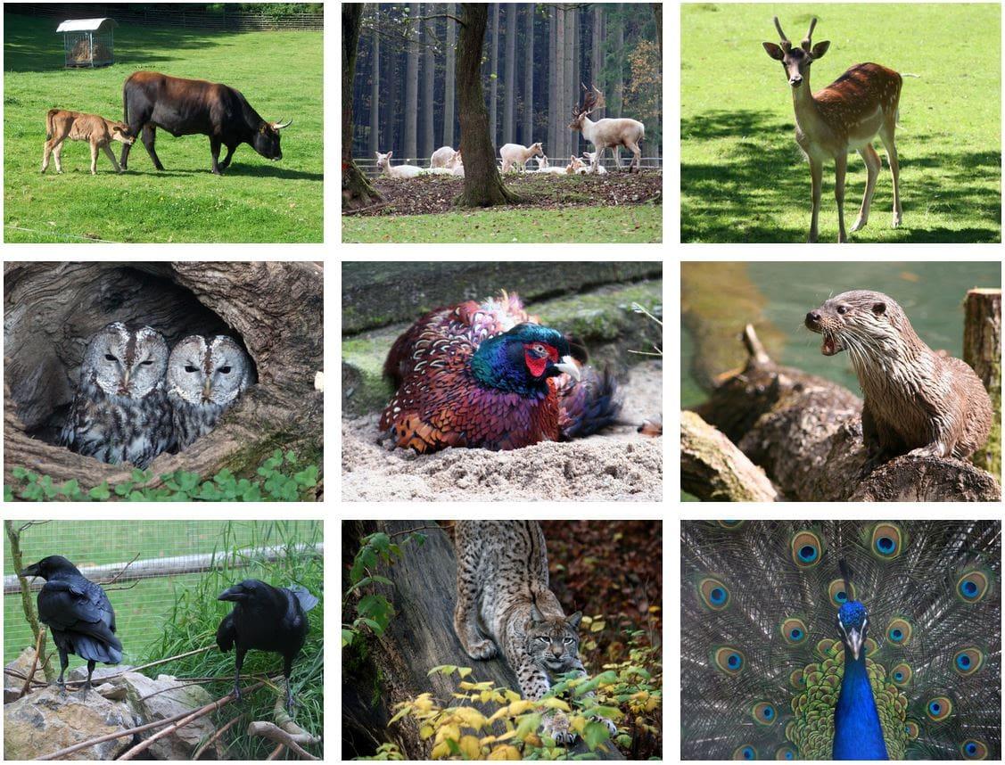 Wild-Park Klaushof: Spannende Tier- und Naturbeobachtungen