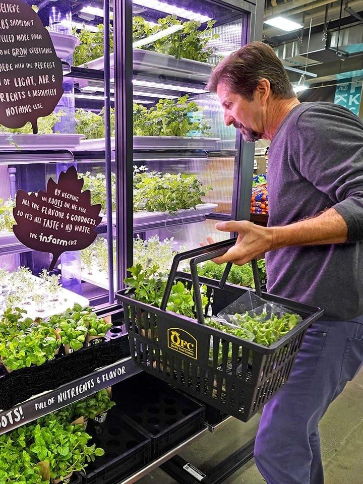 Ernten gehen im Supermarkt: In den Trabold Frischemärkten wachsen jetzt Kräuter!