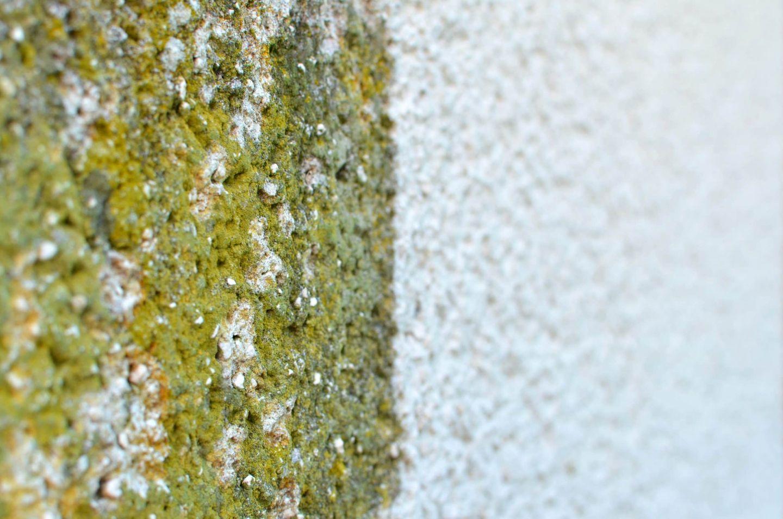 Fassadenreinigung mit Fassaderein.de: Saubere Fassade ohne Streichen