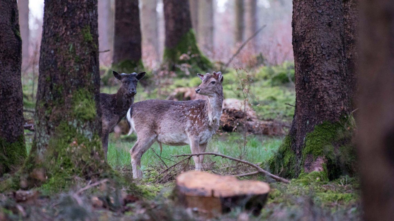 Wald-Knigge