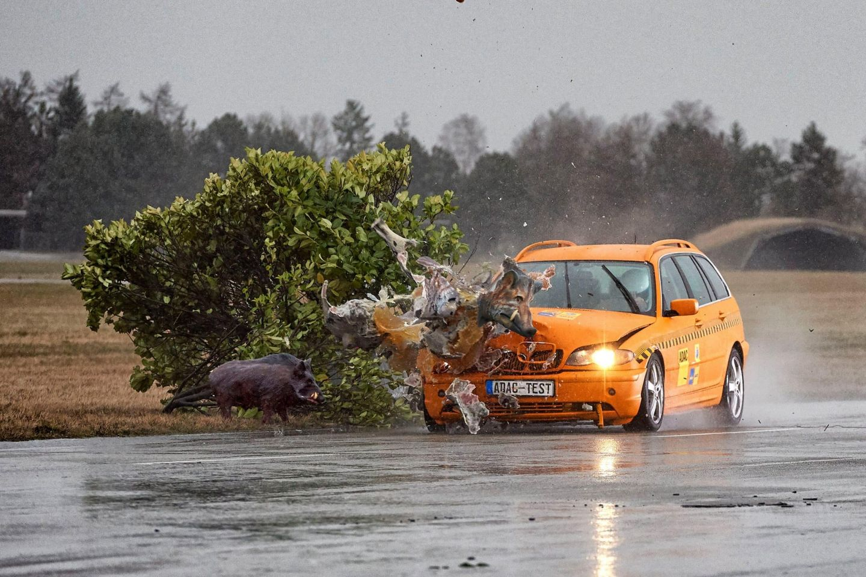 Wildunfall: Gefahr steigt im Herbst