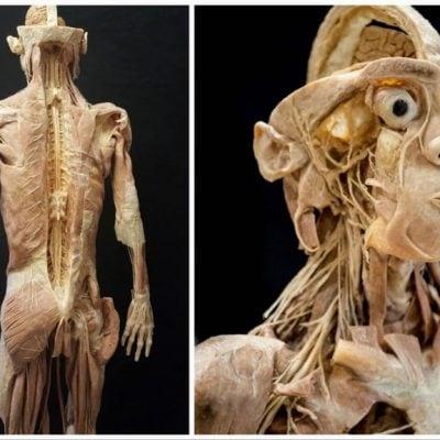 Anatomische Ausstellung Lehre der Toten
