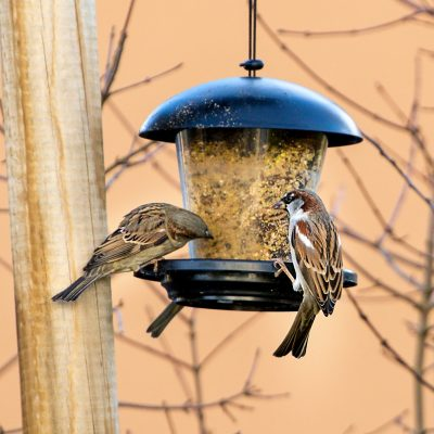 Vögel füttern