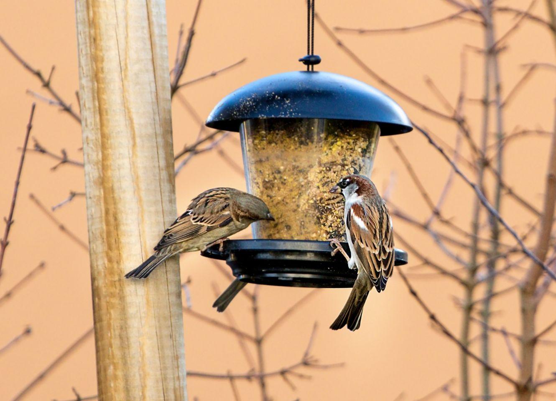 Vögel füttern: Liebhaberei oder Artenschutz?