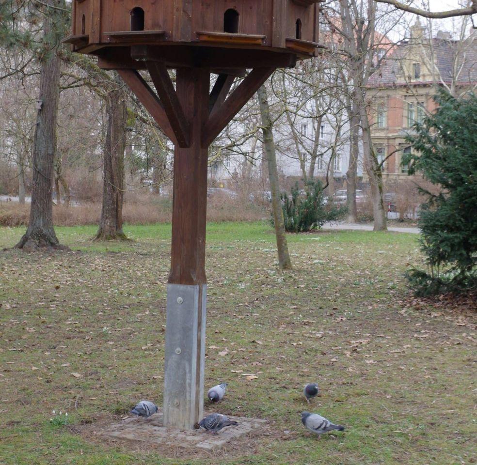 Nix zu futtern: Würzburger Stadttauben in Not