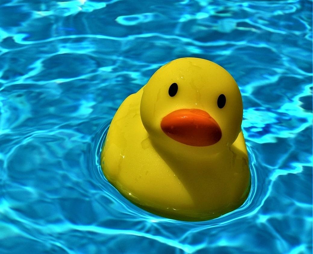 Würzburger Entenrennen 2021 fällt ins Wasser