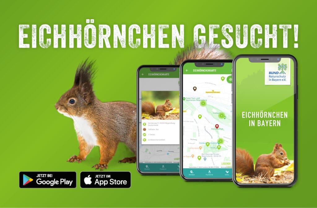 Eichhörnchen-Bayern