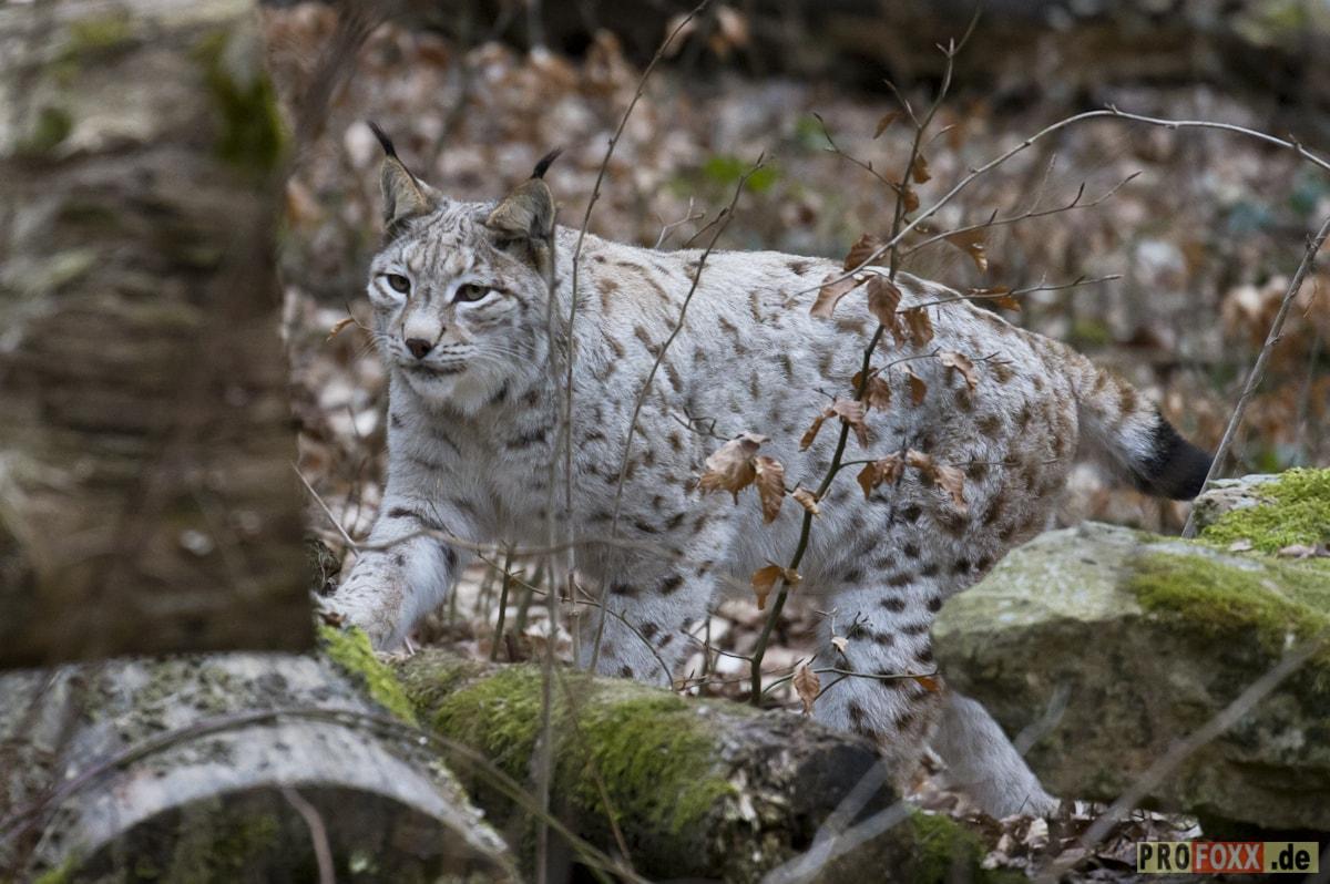 Wild-Park Klaushof: Ein Erlebnis für die ganze Familie
